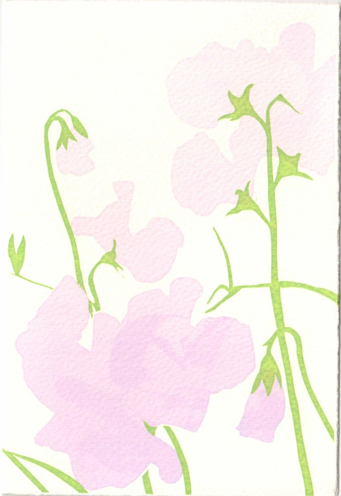 Image of Sweet peas
