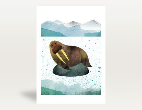 Image of Walrus