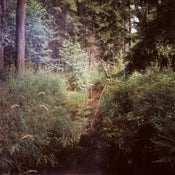 Image of South-Bohemian forests I
