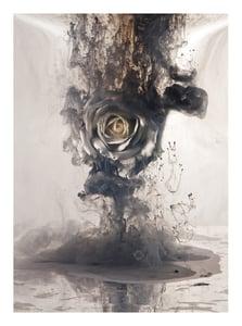 Image of White Rose I