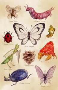 Image of Scientific Illustrations (Pokémon) - Print 12x18