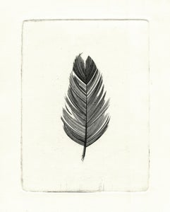 Image of Feather Etching