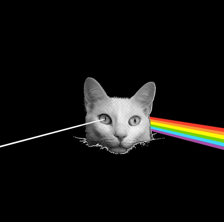 Image of DARK SIDE OF THE KITTY