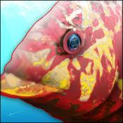 Image of Hog Snapper | FishEyez