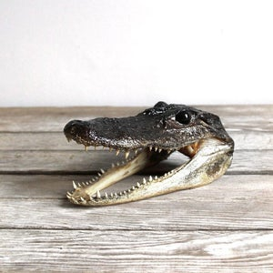 Image of Small Alligator Head