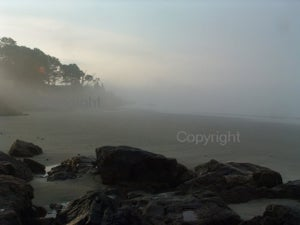 Image of Misty Morning -- 8x10 Photograph
