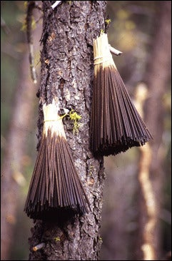 Image of Incense Woodsy