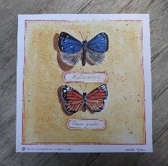 Image of Butterfly Print no.1