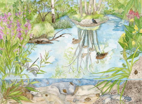 Image of Wetlands - Limited Edition Giclee Print