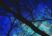 Image of At Night