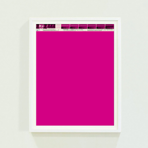 Image of PANTONE® Letraset Posters × Fuchsias