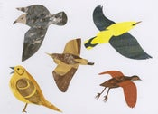Image of Endangered Birds No.4