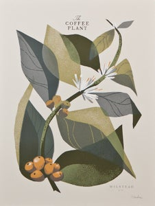 Image of The Coffee Plant (Branch) - Open Edition