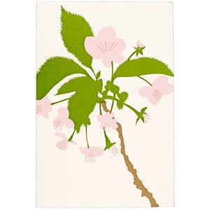 Image of Blossom Card