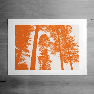 Image of Silverwood print