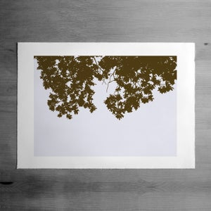 Image of Summer Bough print