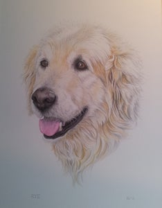 Image of Animals & Pet Portraits Original Art