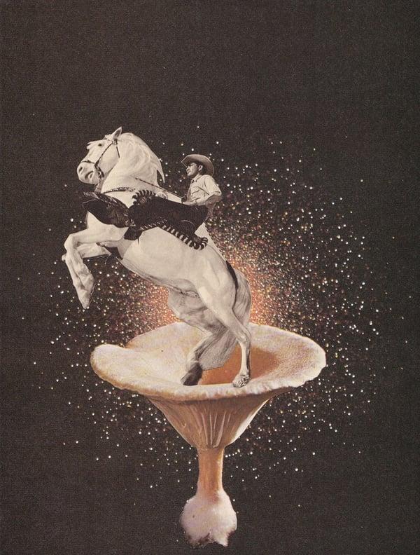 Image of Mushroom Cowboy