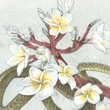 Image of Brown Vine Snake and Plumeria