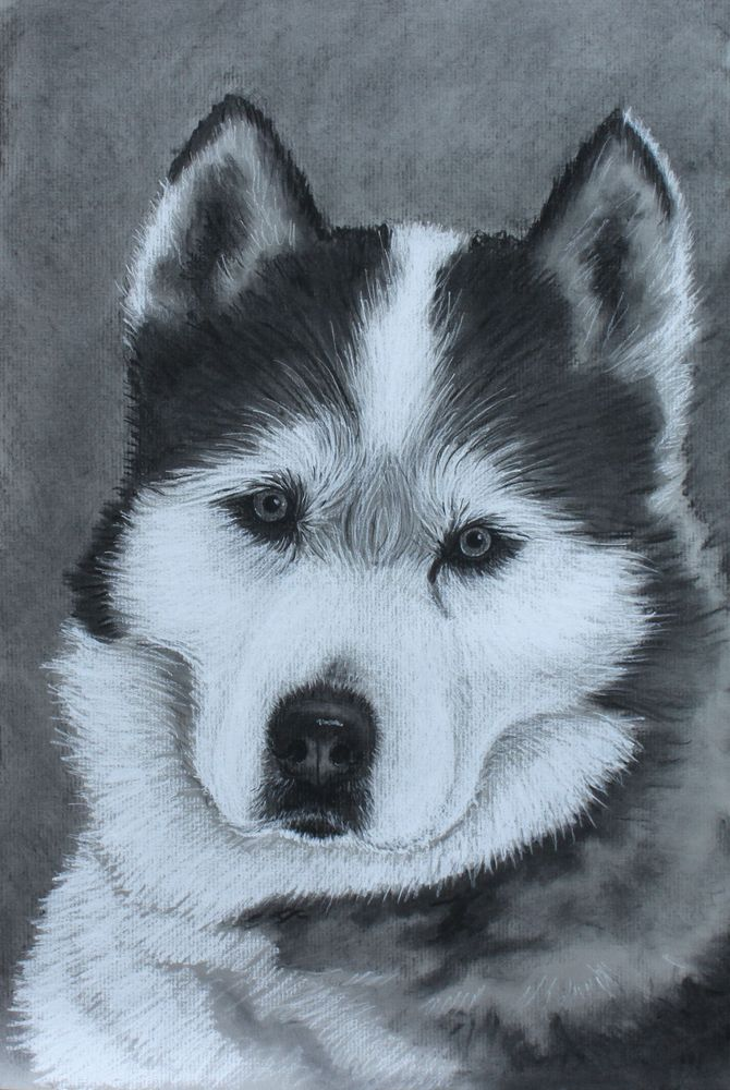 Image of Custom Pet Portrait Charcoal Drawing