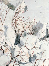 Image of White Tailed Ptarmigans Notecard