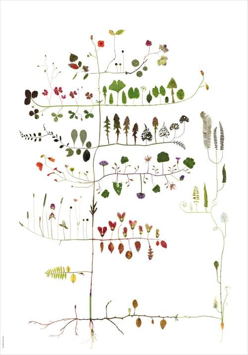 Image of Multitree / Multiväxt