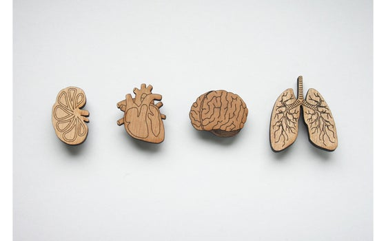 Image of Organ Brooches