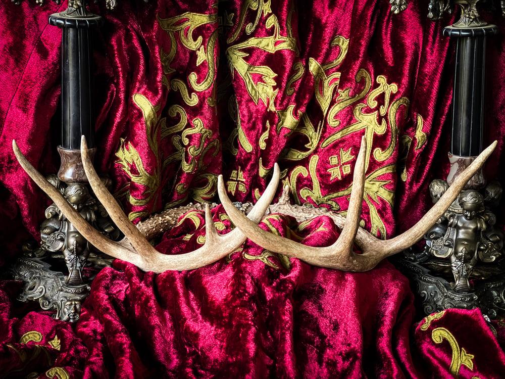 Image of Antler - Crown