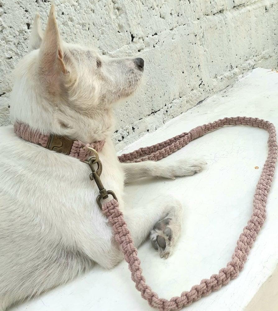 Image of Macramé Dog Collar & Leash