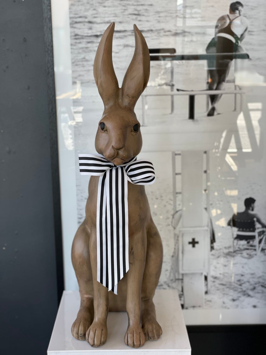 Image of Hunter the Hare