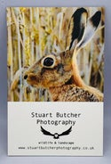 Brown Hare - #3 - Norfolk Wildlife Series - SB Photography