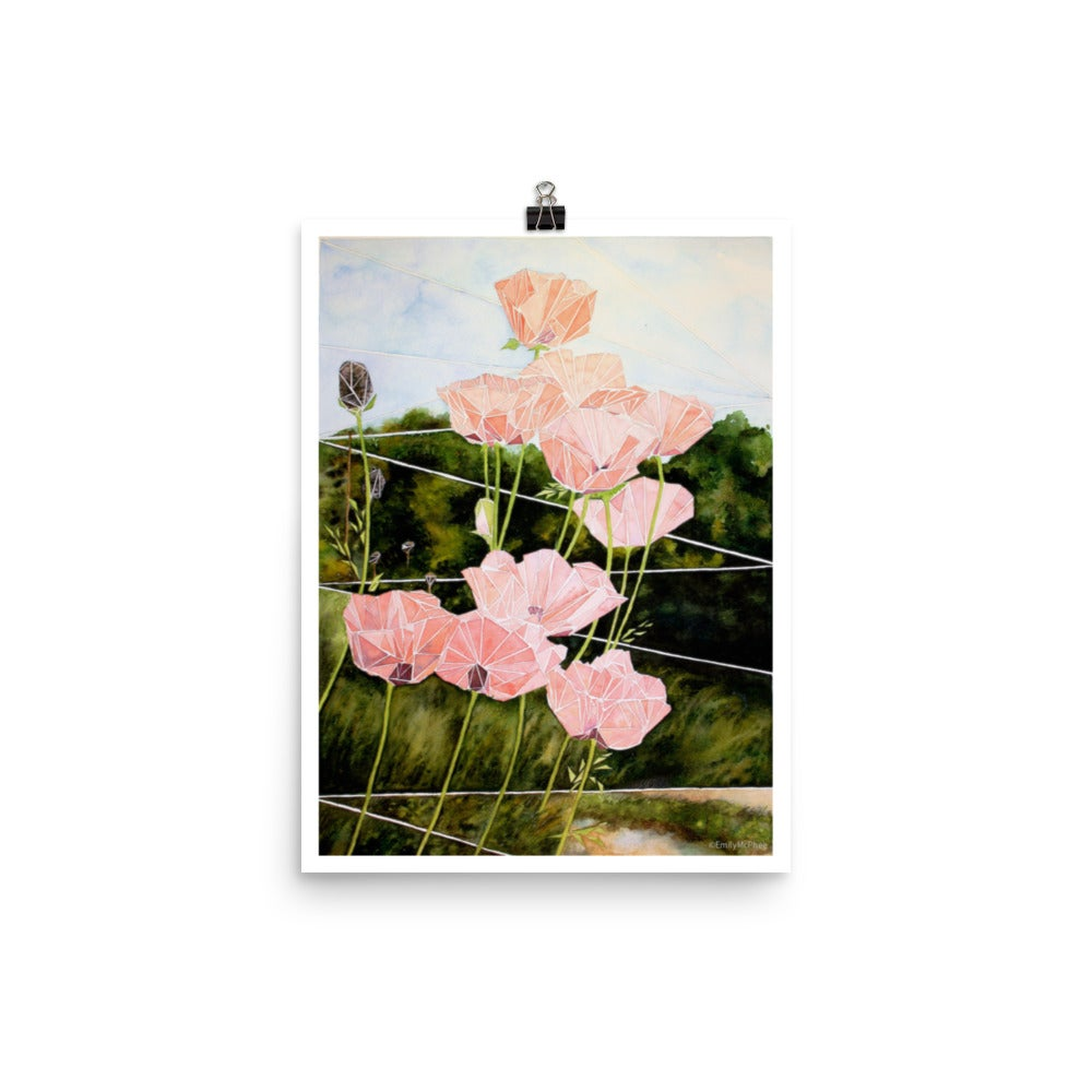 Image of Coral Poppies - Fine Art Print