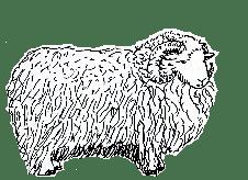 Sage Woolens