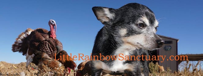 Little Rainbow Sanctuary