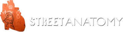 Street Anatomy Gallery Store