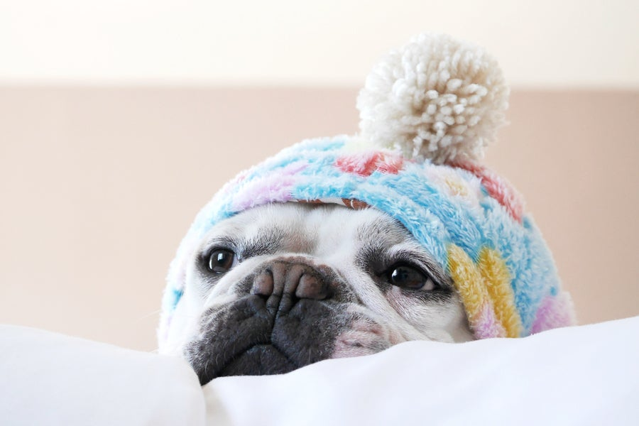 Frenchiewear - Shop dog clothes for French Bulldogs