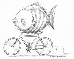 Cycling Fish  Home