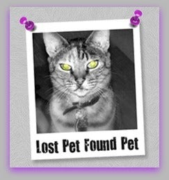 Lost Pet Found Pet