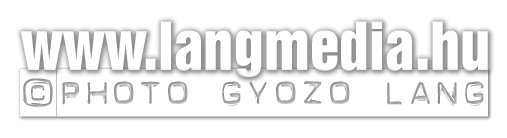 langmedia